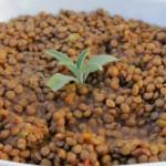Zuppetta di lenticchie e acciughe sotto sale