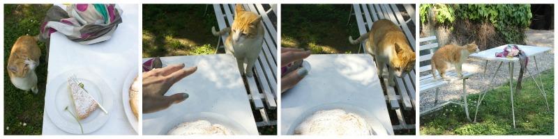 Torta gatto 1